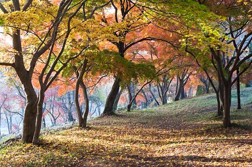 長瀞「日本の秋の風景」:スマホ壁紙(0)