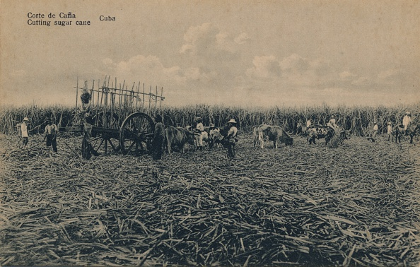 Cutting「'Corte De Cana - Cutting Sugar Cane - Cuba', C1910」:写真・画像(18)[壁紙.com]