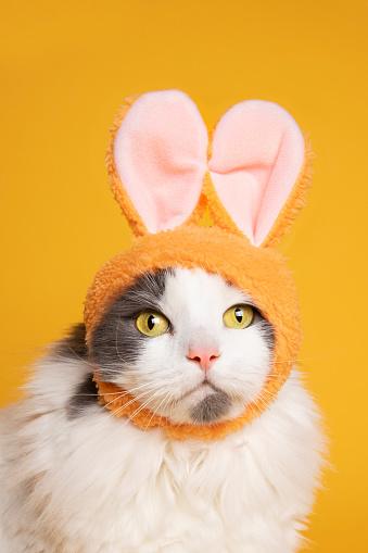 Rabbit「Easter Kitty on Yellow」:スマホ壁紙(15)