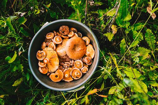Foraging「Bucket of mushrooms in grass」:スマホ壁紙(6)