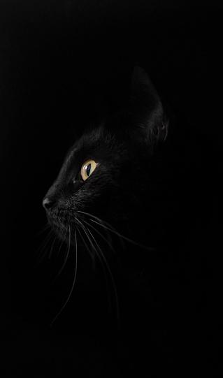 black cat「Profile of black cat against black background」:スマホ壁紙(10)