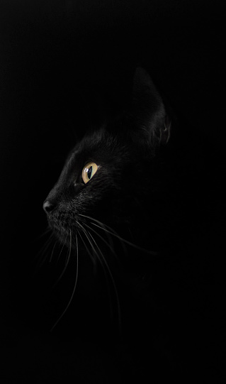 Animal Whisker「Profile of black cat against black background」:スマホ壁紙(6)