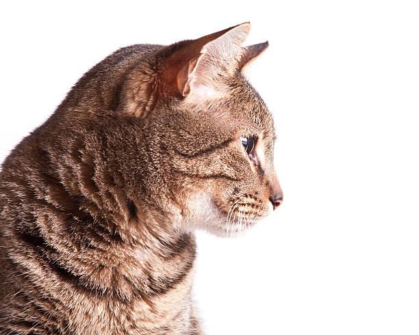 Profile of a cat:スマホ壁紙(壁紙.com)