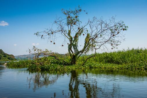 Lake Victoria「Africa, Uganda, Jinja, Lake Victoria, lakeshore」:スマホ壁紙(4)