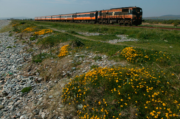 Grass Family「A Rosslaire Europort - Dublin Connolly train follows the beach at Newcastle behind a Class 071 Diesel Electric. May 2004.」:写真・画像(4)[壁紙.com]
