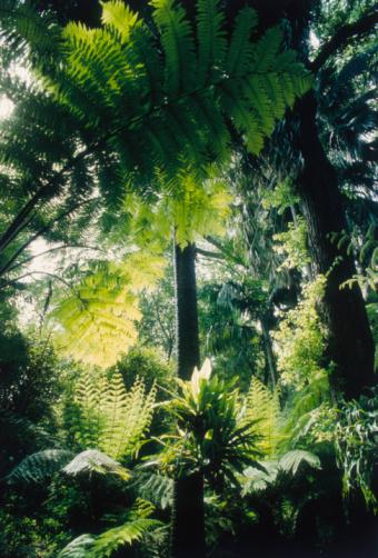 Endangered Species「Tropical Botanic Garden Plants」:スマホ壁紙(18)