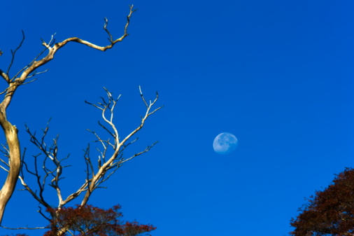 Nikko City「Moon and dead tree,  Nikko city, Tochigi Prefecture, Honshu, Japan」:スマホ壁紙(11)