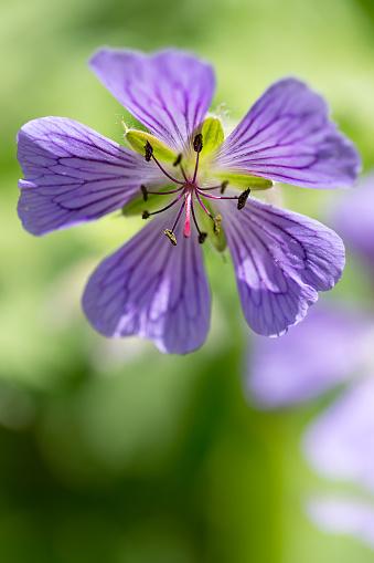 Midday「Silverbush flower」:スマホ壁紙(16)