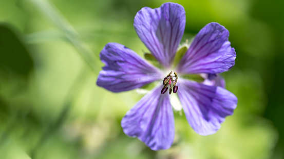 Midday「Silverbush flower」:スマホ壁紙(12)
