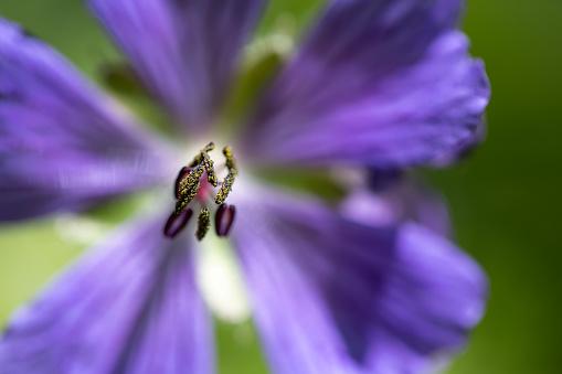 Midday「Silverbush flower」:スマホ壁紙(9)