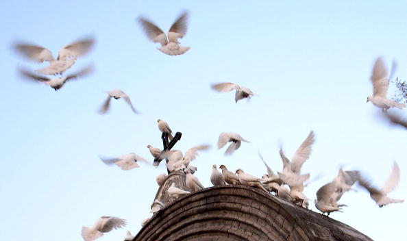 Church「New Bird Flu Outbreak Reported In Central China」:写真・画像(5)[壁紙.com]