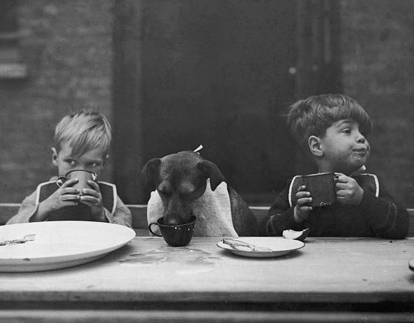 動物・ペット「Dog's Dinner」:写真・画像(18)[壁紙.com]