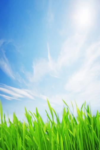 春「自然光が差し込む芝生フィールド」:スマホ壁紙(9)