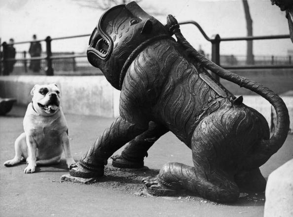 Fred Morley「Cannon Bites Dog」:写真・画像(16)[壁紙.com]