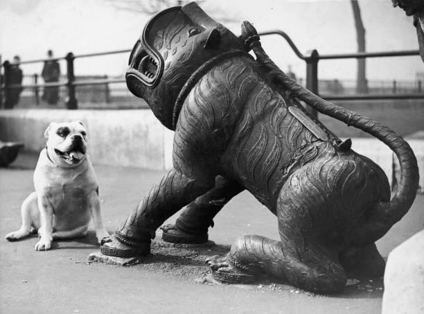 Cannon Bites Dog:ニュース(壁紙.com)