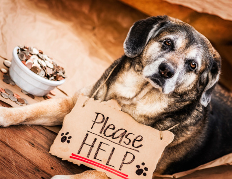 A Helping Hand「Homeless and Hungry Dog Begging for Help」:スマホ壁紙(19)
