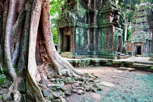 Ta Prohm Temple「Cambodia, Siem Reap, Angkor, Ta Prohm Temple」:スマホ壁紙(16)