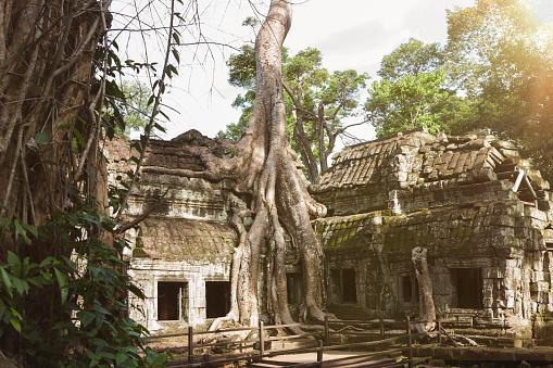 Ta Prohm Temple「Cambodia, Siem Reap, Angkor, Ta Prohm temple」:スマホ壁紙(10)