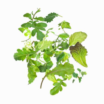 Radicchio「Salad greens」:スマホ壁紙(15)