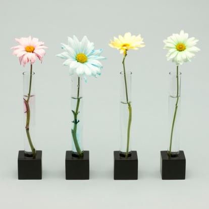 花「Four flowers」:スマホ壁紙(8)
