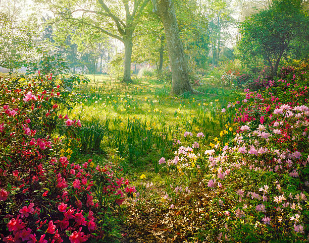 bright hazy sunlight through azalea and daffodil garden:スマホ壁紙(壁紙.com)