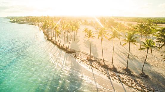 ココヤシの木「日当たりの良いカリブの午後」:スマホ壁紙(17)