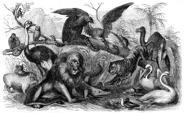 Israelite「Animals forbidden to be eaten by Israelites」:写真・画像(4)[壁紙.com]