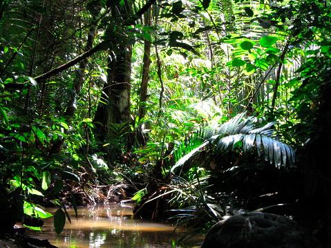 アマゾン熱帯雨林「Stream in rainforest near Manaus, Brazil」:スマホ壁紙(5)