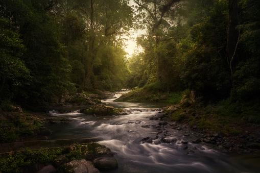 New South Wales「Stream in rainforest, Barrington Tops, New South Wales, Australia」:スマホ壁紙(2)
