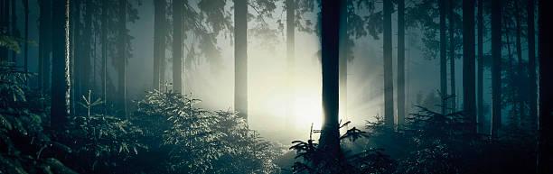 Light in forest:スマホ壁紙(壁紙.com)
