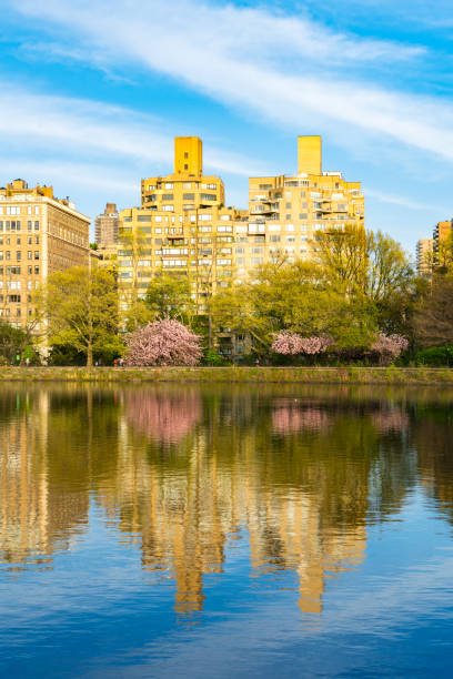 Architectures of Central Park East District reflect to Central Park Reservoir in New York. Cherry blossoms trees and fresh green leaves are growing in springtime.:スマホ壁紙(壁紙.com)