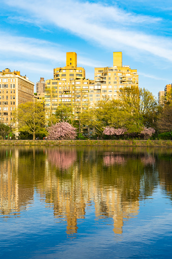 Cherry Blossom「Architectures of Central Park East District reflect to Central Park Reservoirin New York. Cherry blossoms trees and fresh green leaves are growing in springtime.」:スマホ壁紙(10)