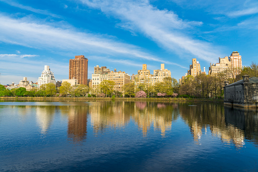 Cherry Blossom「Architectures of Central Park East District reflect to Central Park Reservoir in New York. Cherry blossoms trees and fresh green leaves are growing in springtime.」:スマホ壁紙(5)