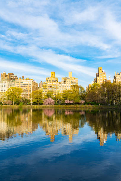 Architectures of Central Park East District reflect to Central Park Reservoirin New York. Cherry blossoms trees and fresh green leaves are growing in springtime.:スマホ壁紙(壁紙.com)