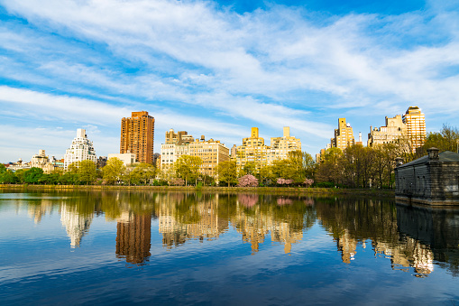 Cherry Blossom「Architectures of Central Park East District reflect to Central Park Reservoir in New York. Cherry blossoms trees and fresh green leaves are growing in springtime.」:スマホ壁紙(6)