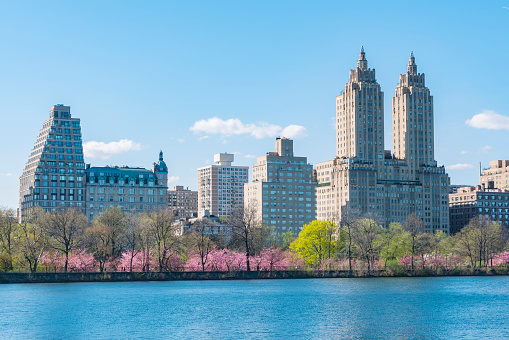 Cherry Blossom「Architectures of Central Park West Historic District behind the rows of Cherry blossoms trees and fresh green trees at the Central Park Reservoir at New York.」:スマホ壁紙(2)