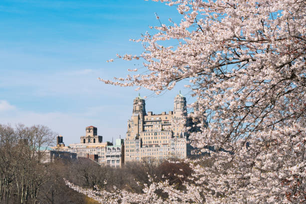 Architectures of Central Park West Historic District behind the Cherry blossoms from Central Park New York.:スマホ壁紙(壁紙.com)