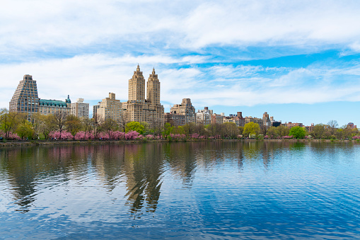 Cherry Blossom「Architectures of Central Park West Historic District, rows of Cherry blossoms trees and fresh green reflect to Central Park Reservoir in New York.」:スマホ壁紙(1)