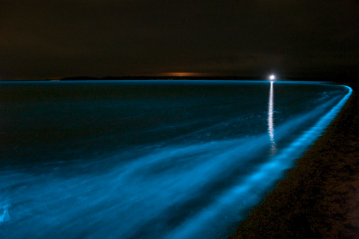 Algae「Bioluminescence in waves in the Gippsland Lakes, Victoria, Australia.」:スマホ壁紙(18)