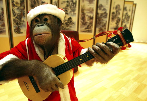 Christmas「South Korea's Trainers and Animals Prepare For Christmas Performance」:写真・画像(9)[壁紙.com]
