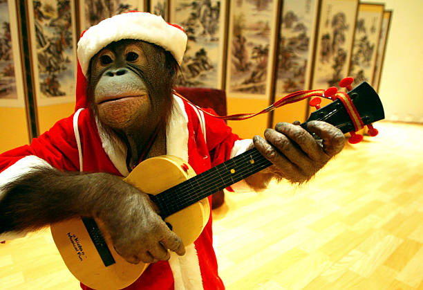 South Korea's Trainers and Animals Prepare For Christmas Performance:ニュース(壁紙.com)