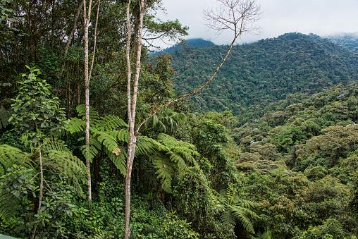 Amazon Rainforest「Tropical Cloud Forest」:スマホ壁紙(5)