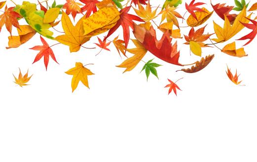秋「シームレスな落ちる秋の落ち葉」:スマホ壁紙(13)