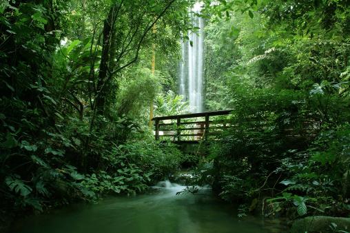アマゾン熱帯雨林「滝」:スマホ壁紙(2)