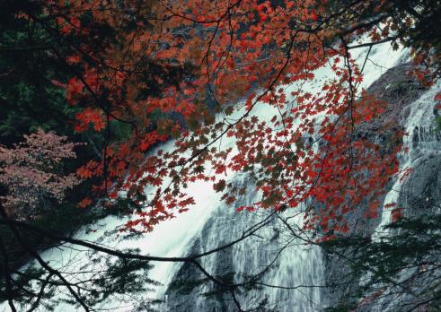 Nikko City「Waterfall」:スマホ壁紙(12)