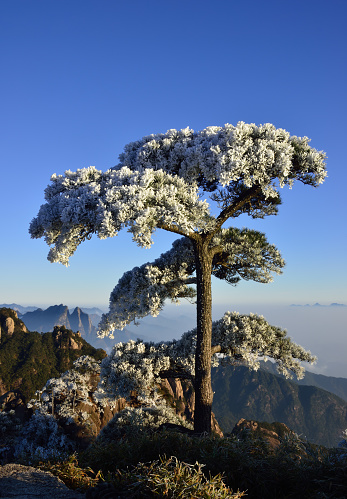 National Park「Sanqingshan scenery,Jiangxi Province,China」:スマホ壁紙(12)