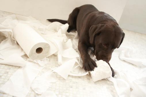 Pets「Dog lying on bathroom floor playing with lavatory roll」:スマホ壁紙(9)