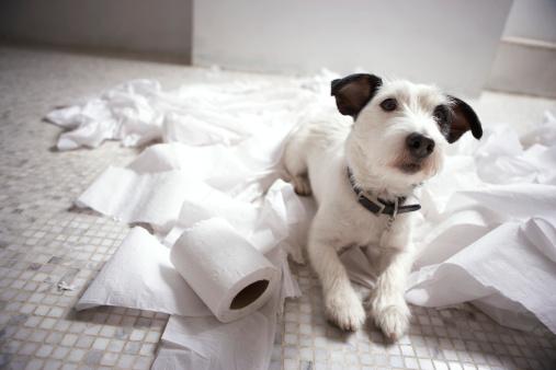 Mischief「Dog lying on bathroom floor amongst shredded lavatory paper」:スマホ壁紙(2)