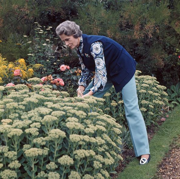 Horticulture「Lady Isobel Barnett」:写真・画像(15)[壁紙.com]