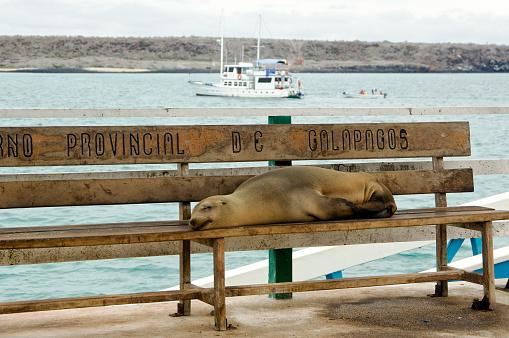 Sea Lion「Sleeping sea lion, Galapagos Islands」:スマホ壁紙(9)